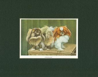 1919 Vintage Pekingese Dog Print
