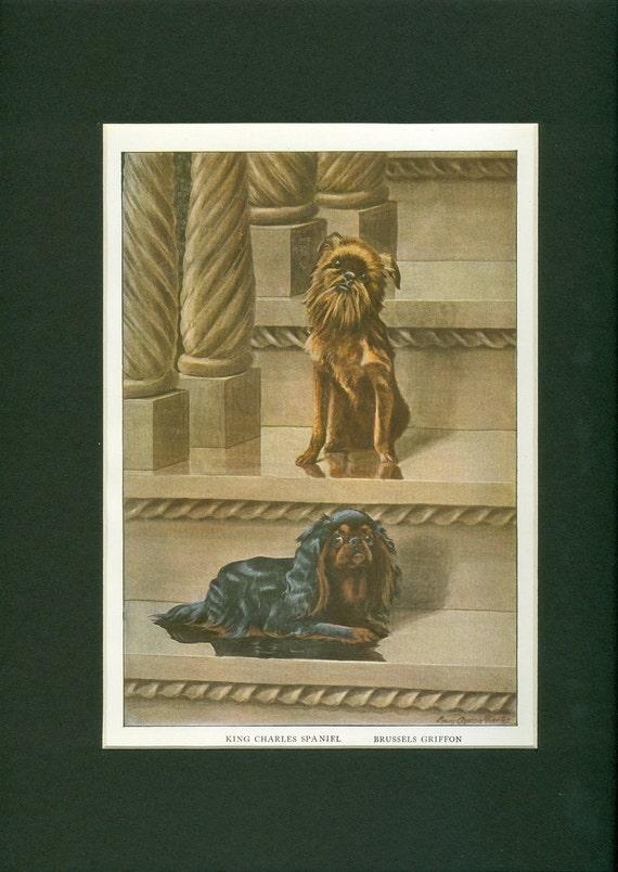 1919 Vintage King Charles Spaniel and Brussels Griffon Dog Print