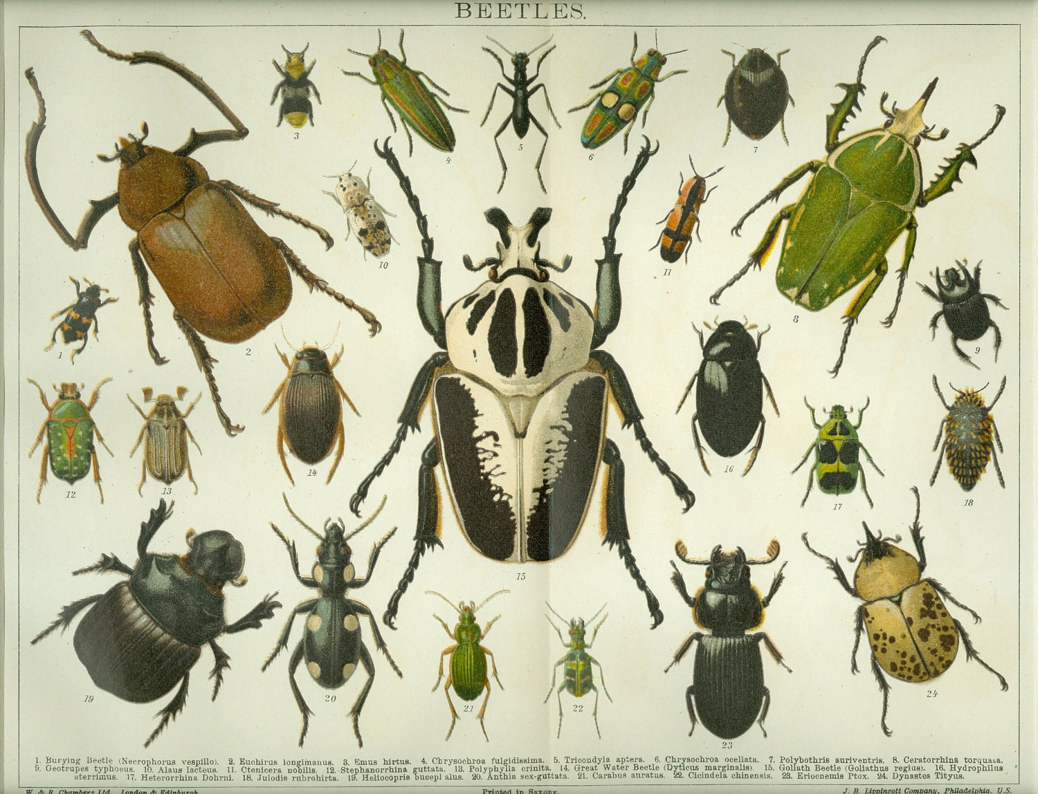 Vintage Insect 17
