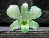 REAL NATURAL SOFT GREEN ORCHID PIN, BROOCH