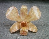 REAL Natural Camel and Brown ORCHID Pendant and Pin