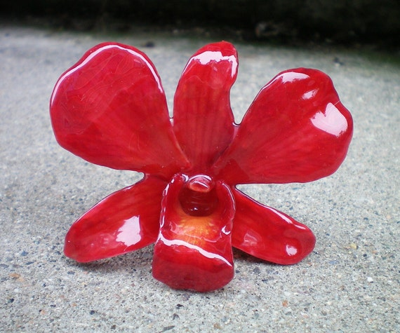 REAL Natural Rich Ruby Red ORCHID Pin and Pendant