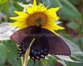 Bugs & Sunflower....blank greeting card assortment