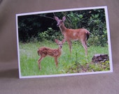Whitetail Doe & Fawn, wildlife photographs, 3 card assortment