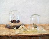 Pretty Bell Jar, a Sweet Glass Display Cloche