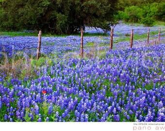 Hill Country Heaven - signed original photograph - Texas Wild Flowers Landscape, Award Winner