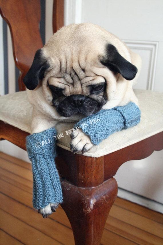 Snuggly Dog Leg Warmers by AllYouNeedIsPugShop on Etsy