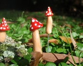 Terrarium Mushrooms harvested by our Nisse (or Gnomes). Perfect also for bonsai or for a garden table setting