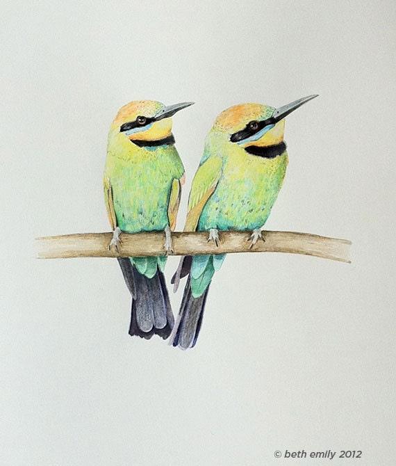 ORIGINAL illustration Rainbow Honey Eaters