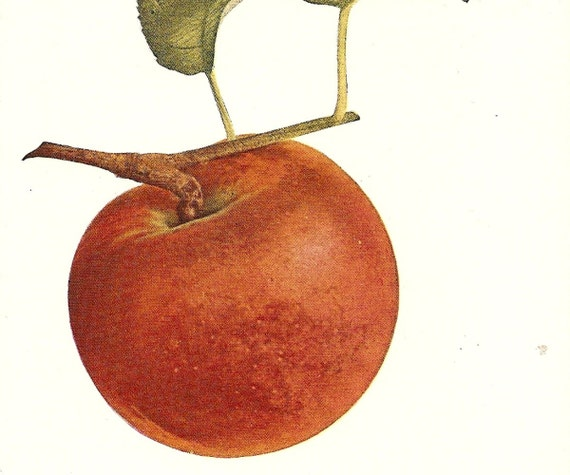 The Perfect Apple .. 1929 Antique Book Plate