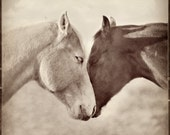 "Horse Photograph - Two Horses - Horse Portrait - Fine Art Print - 8"" x 8"" - Animal photography - Horse Hug"