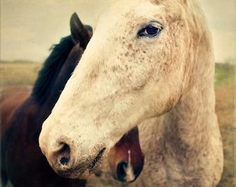 Horse Photograph - Chuck - Fine Art Print - 8x8 - Animal Photograph - Horse Portrait