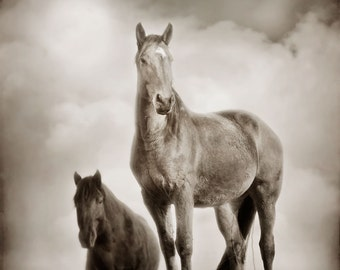 Horse Photograph -Moose and Merlin - Horse Portrait - 8x8 - Animal photography