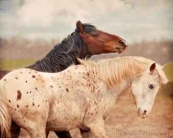 8x8 METALLIC PRINT - Horse Photograph - Horse Portrait  - Animal photography - Lead Or Be Led