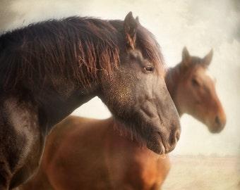 Merlin In Repose - 8x8 Fine Art Print - Horse Portrait - Horse Photography