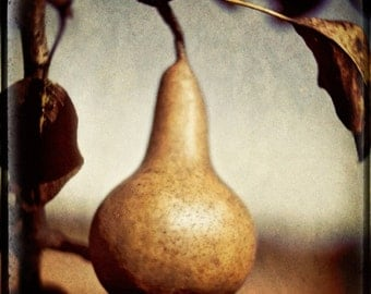 Muted Pear with Sky, Rustic Decor, Pear, FIne Art Photography