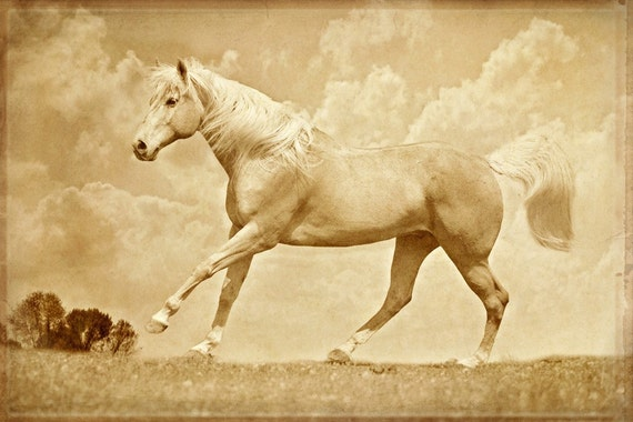 Horse Photograph -Palomino - Horse Portrait - Fine Art Print - Animal photography - Golden Palomino