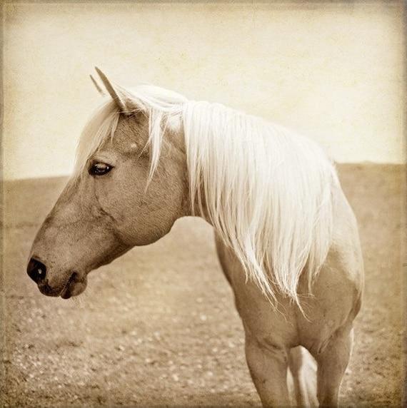 Horse Photograph -Palomino - Horse Profile - Fine Art Print - 8x8 - Animal photography - Palomino Profile