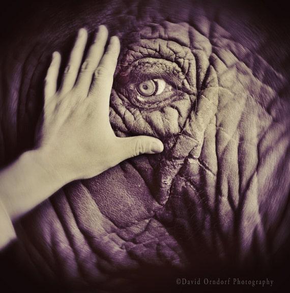 Elephant Eye - 8x8 Fine Art Print