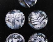Silver Fern magnets, fern glass magnets nz silver fern foliage in black and white nz fern photo NZ fridge magnet art office magnets decor