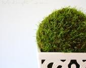 Live Moss Topiary and Terrarium Tutorial