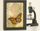 Map of New Jersey with Framed Monarch Butterfly
