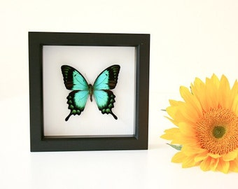 Sea Green Swallowtail featured in Pottery Barn catalog