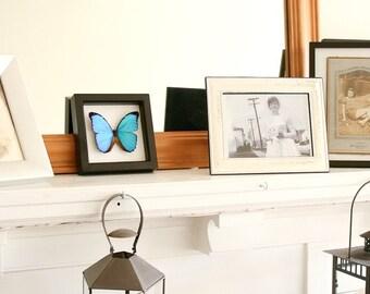 Framed Blue Morpho MORPHO MENELAUS Butterfly Shadowbox Display