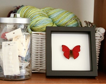 Valentine Gift Heart Butterfly Insect Display