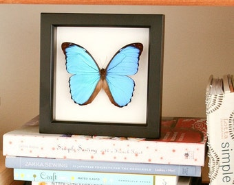 Blue Morpho Butterfly Wedding Display