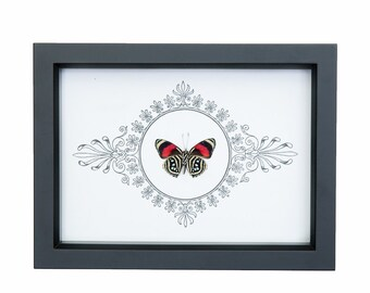 Real Framed Butterfly with Archival Print Design