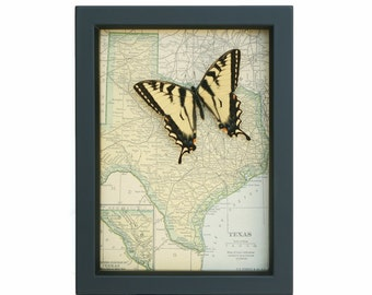 Vintage Map of Texas with Tiger Swallowtail butterfy display