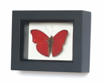 Real Framed Butterfly Decor Display