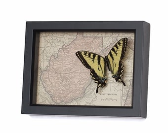 Framed Old Map of West Virginia with Tiger Swallowtail