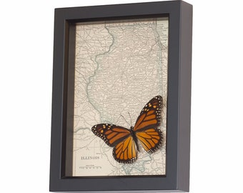 Framed Monarch Butterfly with Old Map of Illinois