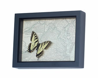 Framed Map Virginia with real Butterfly from state