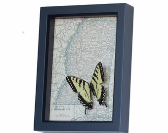 Old Map of Mississippi with framed Tiger Swallowtail Butterfly
