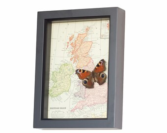 Map of England Ireland Scotland with native butterfly