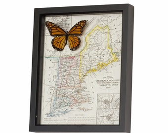 Map of New England with Monarch Butterfly