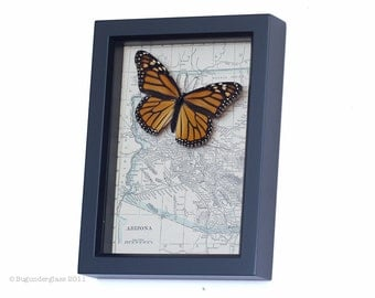 Framed Map of Arizona with Vintage Butterfly