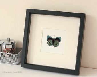 Real Framed Charles Darwin Butterfly Display  F1059