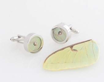 Cuff links Real Insect Wing Luna Moth Fathers Day Gift