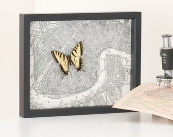 Framed Map of New Orleans with Framed Butterfly