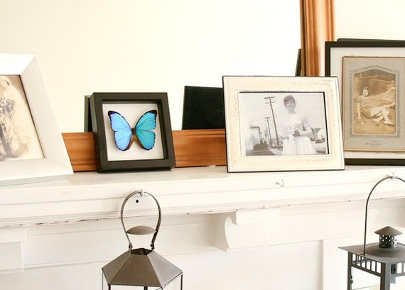 Framed Blue Morpho Wedding Gift