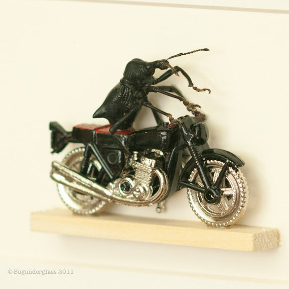Weevil Knievel Beetle riding a motorcycle insect art diorama