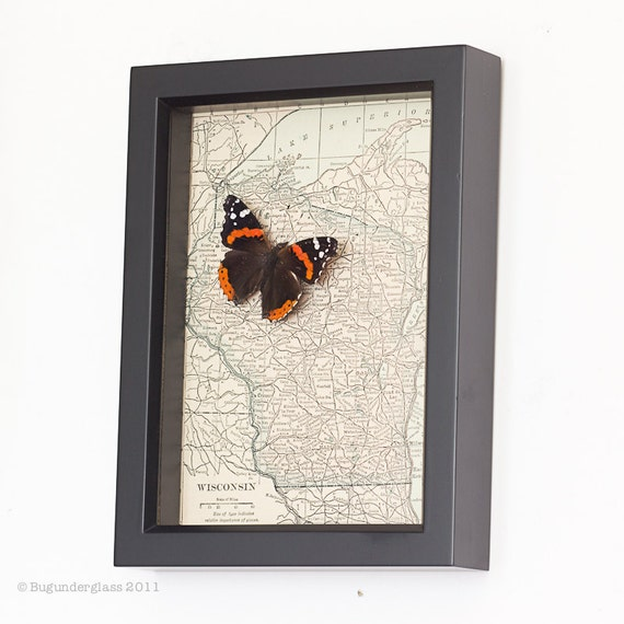 Framed Map of Wisconsin with Red Admiral Butterfly