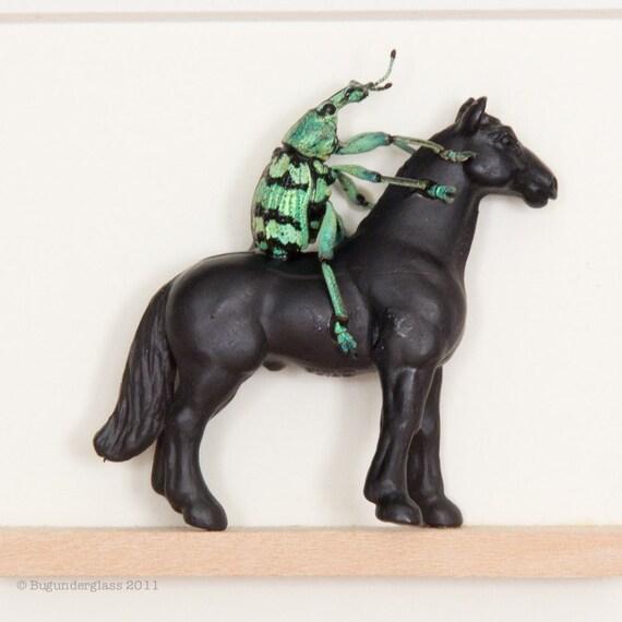 Kentucky Derby Beetle on a Horse Race