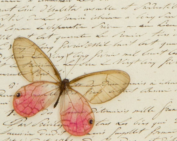 Old French Letter Shabby Chic Naturalist Butterfly Display