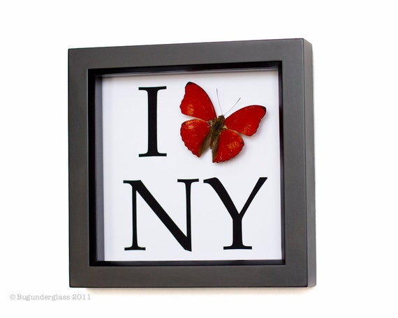 I Love New York Framed Butterfly Display