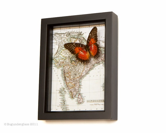 Map of India with Real Framed Butterfly